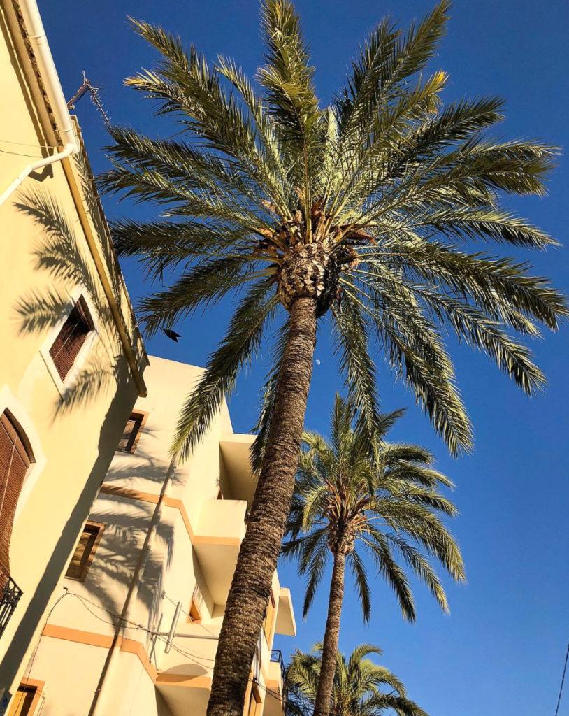 vue palmiers javea