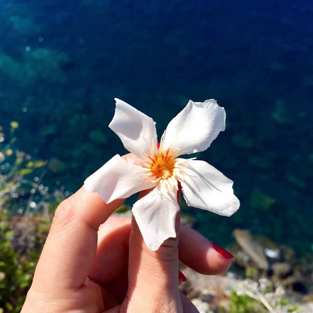 cinque terre italy fleur