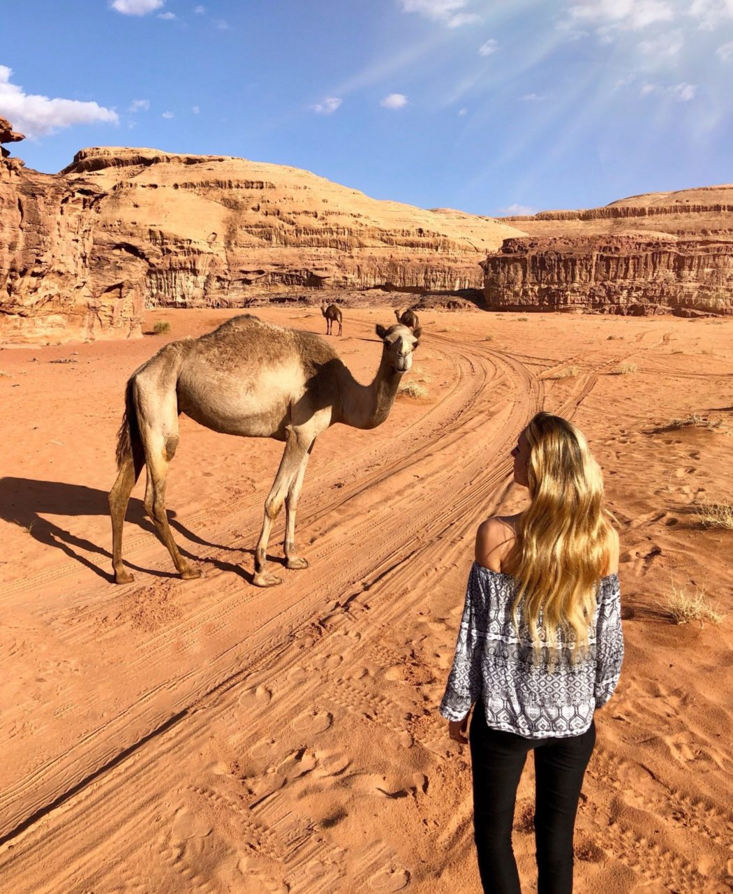 chameau désert du wadi rum