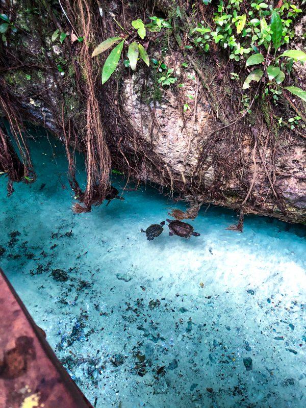 gran cenote mexique yucatan