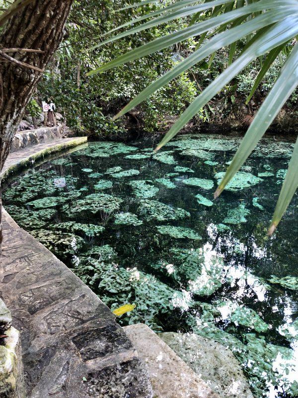 cenote cristalino tulum